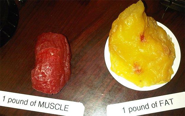 Muskler og fett, vita univers, lavkarbokurs, livsstilsendringskurs, ketolyse.jpg