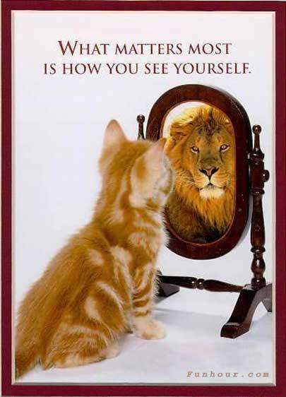 Cat-mirror-lion-how-you-see-yourself.jpg